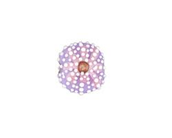 Grace Lampwork Lavender Sea Urchin Lentil 17mm