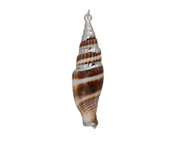 West Indian Cerith Shell Pendant w/ Silver Finish 10-16x33-60mm