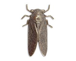 Vintaj Natural Brass Cicada 31x50mm