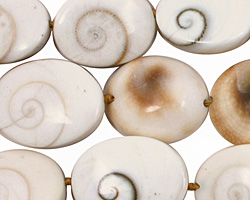 Conch Shell Oval 16-22x12-17mm