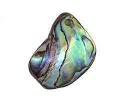 Abalone Shell Fragment Drop 16-27x22-35mm