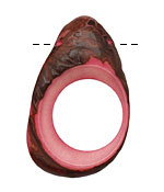 Tagua Nut Angel Skin Open Slice (side drilled) 33-45x24-36mm