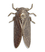 Vintaj Natural Brass Cicada 31x50mm