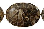 Turritella Agate Flat Oval 38-45x25-31mm