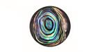 Abalone Round Cabochon 20mm