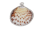Arca Shell Pendant w/ Silver Finish 20-30x21-28mm