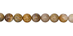 Fossil Coral Round 6mm