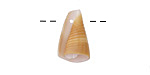 Small Conical Shell Pendant 5-10x16-24mm