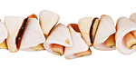 Luhanus Sliced Spiral Shell 12-14x11-15mm