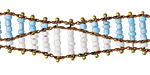 Zola Elements Aqua & White Beaded Double Helix on Brass Chain