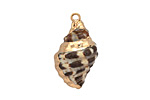 Banded Conch Shell Pendant w/ Gold Finish 12-17x20-29mm