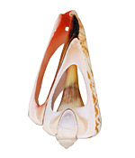 Luhanus Shell Slice Pendant 21-31x43-66mm