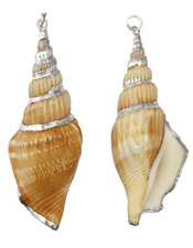 Brown Tibia Shell Pendant w/ Silver Finish 22-25x62-78