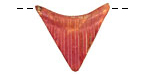 Patricia Healey Copper Triangle Arc 26x24mm