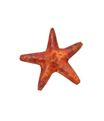 Patricia Healey Copper Double Sided Starfish Bead 30mm