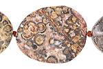 Leopardskin Jasper (matte) Rough Face Freeform Flat Oval 30-42x20-37mm