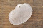 Crystal Recycled Glass Sea Shell Pendant 31x22mm
