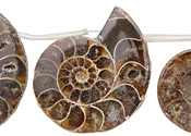 Ammonite Fossil Pendant 34-40x42-48mm