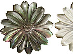 Black Shell Carved Flower Pendant w/Pointy Petals 40mm