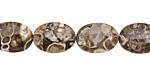 Turritella Agate Flat Oval 14x10mm