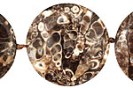 Turritella Agate Puff Coin 28-30mm