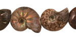 Ammonite Fossil Pieces 15-20x15-17mm