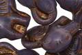 Czech Glass Black Violet w/ Bronze Elephant 20x21mm