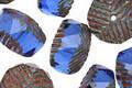 Czech Glass Cobalt Picasso Groovy Rondelle 10x13mm