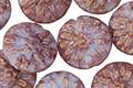 Czech Glass Luster Gladiola Dahlia Flower Coin 14mm