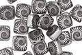 Czech Glass Laser Etched Ammonite on Matte Jet w/ Silver 2-Hole Tile 6mm