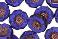 Czech Glass Bronzed Cobalt Hibiscus Coin 12mm