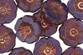 Czech Glass Bronzed Plum Passion Hibiscus Coin 12mm