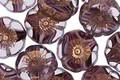 Czech Glass Grape Fizz w/ Gold Luster Hibiscus Coin 12mm