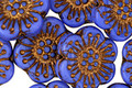 Czech Glass Bronzed Cornflower Blue Wild Rose Coin 18mm