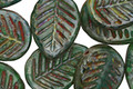 Czech Glass Opaque Emerald Picasso Carved Leaf Drop 12x17mm