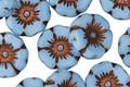 Czech Glass Alice Blue w/ Copper Hibiscus Coin 12mm