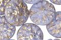 Czech Glass Gilded Butterfly Blue Dahlia Coin 14mm