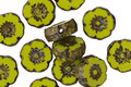 Czech Glass Chartreuse Picasso Hibiscus Coin 8mm