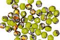 Czech Glass Chartreuse Metallic AB Fire Polished Round 4mm