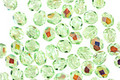 Czech Fire Polished Glass Peridot AB Round 4mm