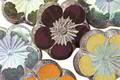 Czech Glass Plum AB w/ Antique Silver Hibiscus Coin 21mm