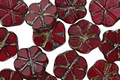 Czech Glass Garnet Picasso 6 Petal Daisy 9mm