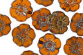 Czech Glass Summer Squash Picasso Hibiscus Coin 9mm