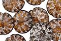 Czech Glass Butter Rum Dahlia w/ Mercury Glass Wash Coin 14mm