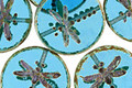 Czech Glass Aquamarine Picasso Dragonfly Coin 17mm