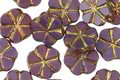 Czech Glass Amethyst w/Gold 6 Petal Daisy 9mm