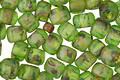 TOHO Frosted Transparent Peridot Picasso Hybrid Round 6/0 Seed Bead