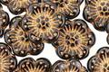 Czech Glass Bronzed Jet Wild Rose Coin 13mm