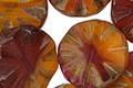 Czech Glass Peanut Butter & Jelly Flower Window Coin 18mm