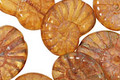 Czech Glass Butterscotch Ammonite 20x13mm
